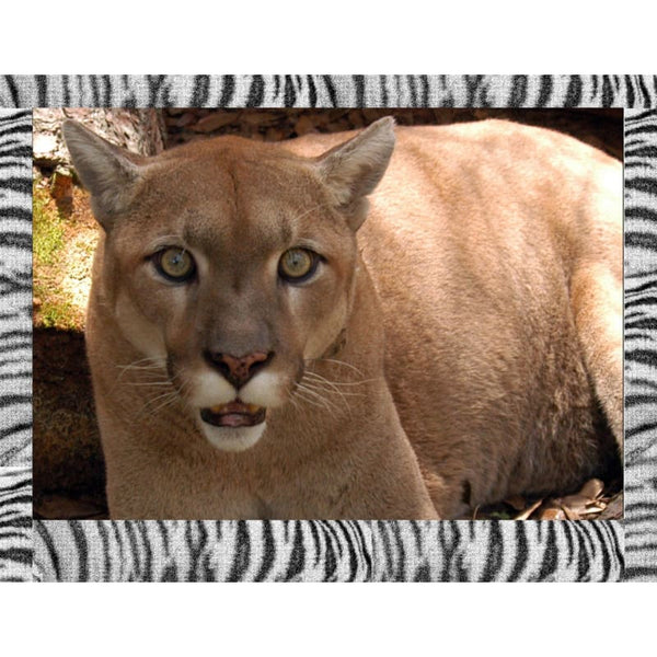 Photo Download Cougar 04 - a websize - Photo