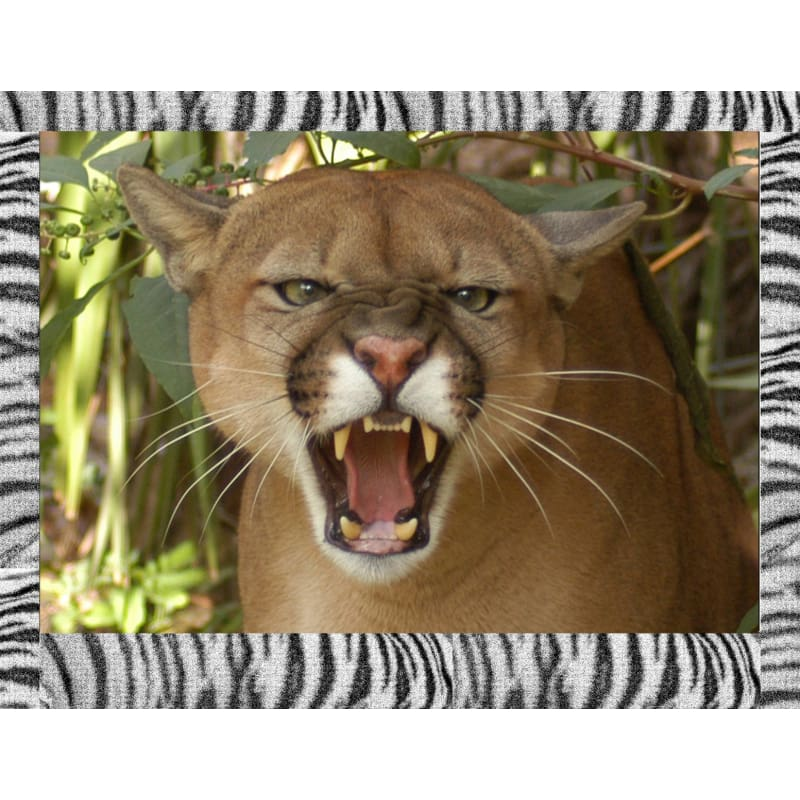 products/photo-download-cougar-05-a-websize-catrescue-vertebrate-wildlife-mammal_671.jpg