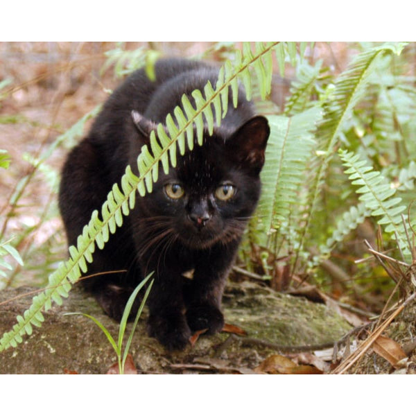 Photo Download Geoffroy Cat 01 - a websize - Photo