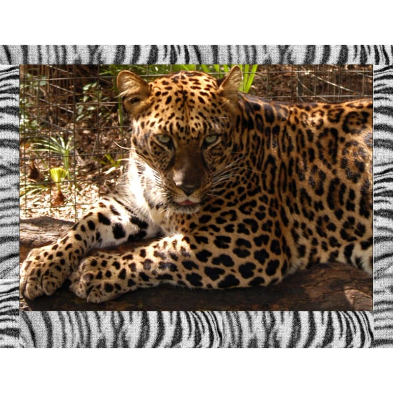 products/photo-download-golden-leopard-05-a-websize-catrescue-vertebrate-terrestrial-animal-wildlife_975.jpg
