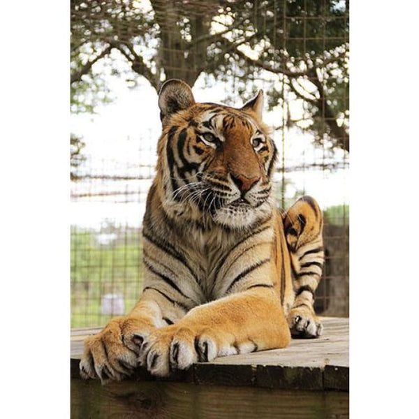 Photo Download Hoover Tiger 02 - A Websize - Photo