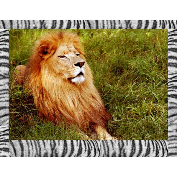 Photo Download Lion 01 - a websize - Photo