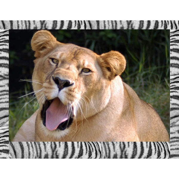 Photo Download Lioness 02 - a websize - Photo