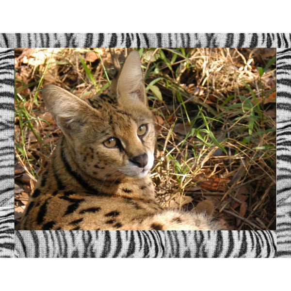 Photo Download Serval 10 - a websize - Photo