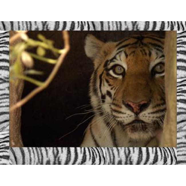products/photo-download-tiger-09-a-websize-catrescue-bengal-wildlife_861.jpg