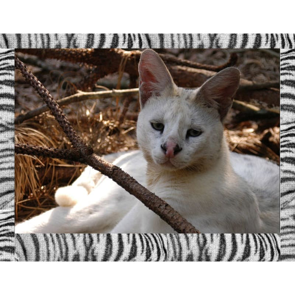 Photo Download White Serval 01 - a websize - Photo