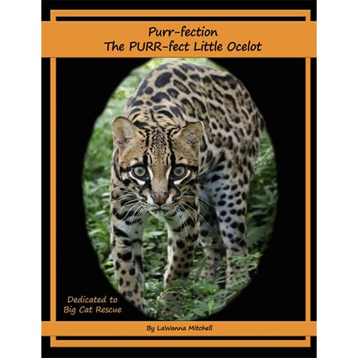 Purr-Fection Ocelot Photo Book - Magazine