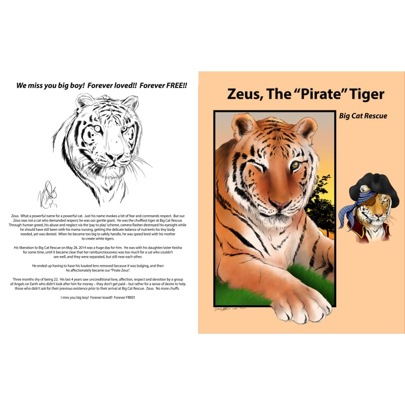 products/zeus-the-pirate-tiger-memorial-photo-book-magazines-tribute-magazine-catrescue-bengal-felidae_834.jpg
