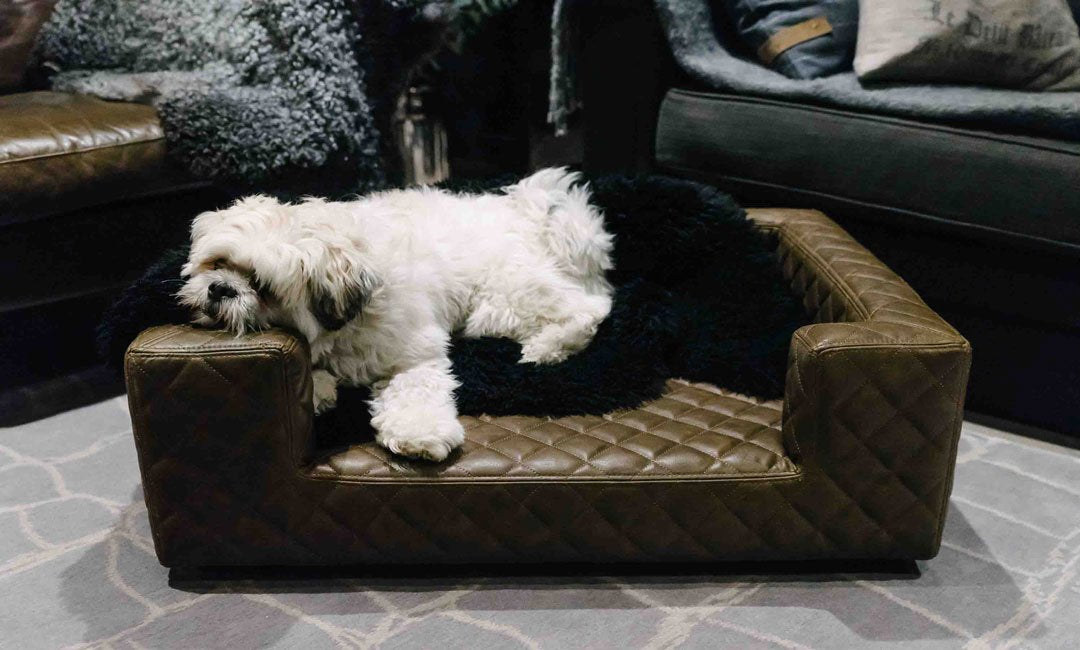 Luxury Pet Furniture