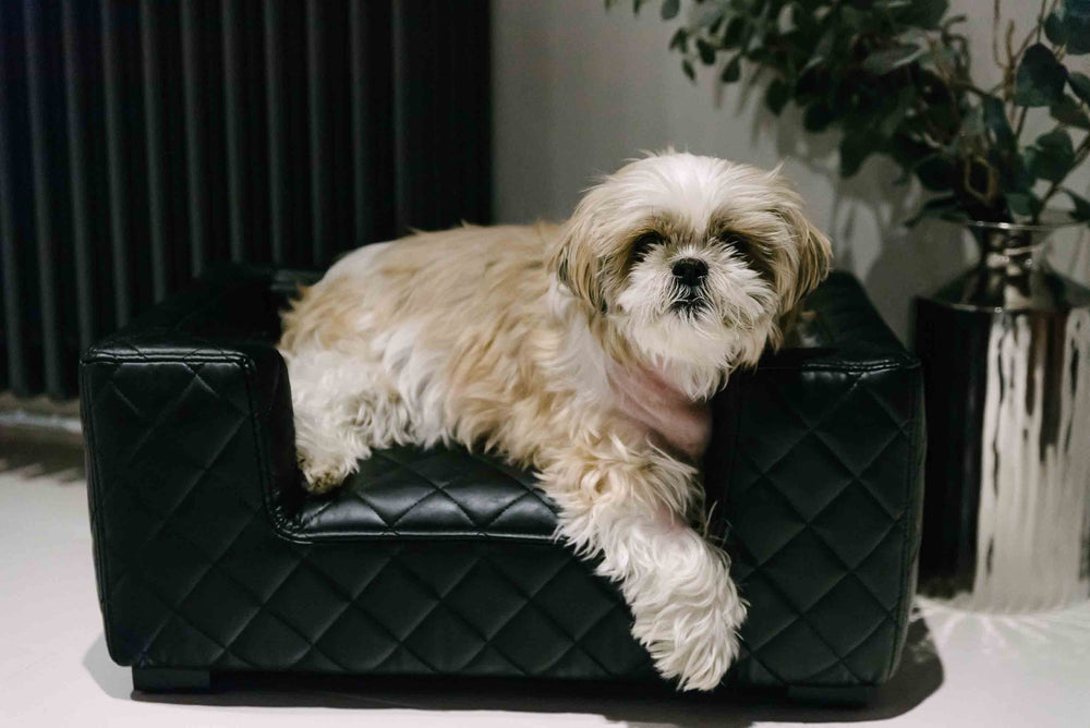 Lord Lou - Edoardo Black Bentley Stitch Dog Sofa - Small