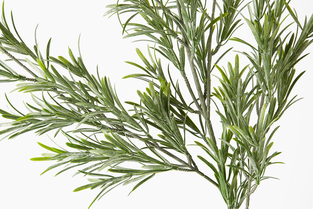 Green Podocarpus Spray