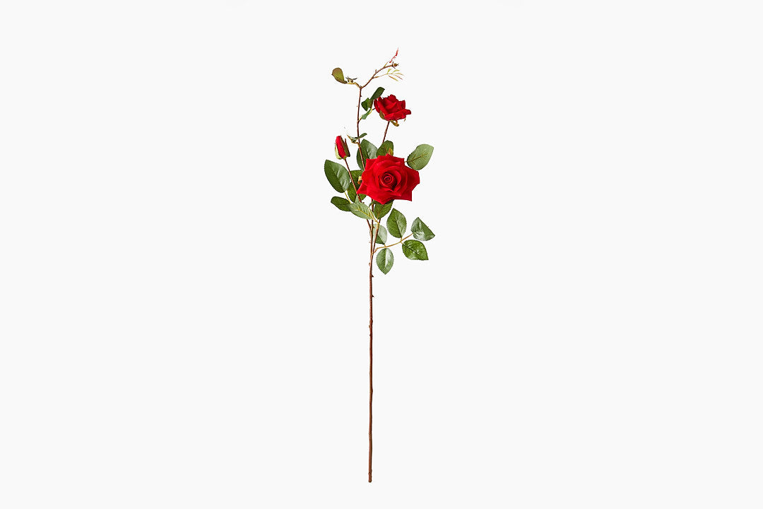 Red Rose Stem by India Jane
