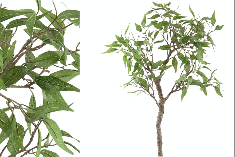 Ruscus branch