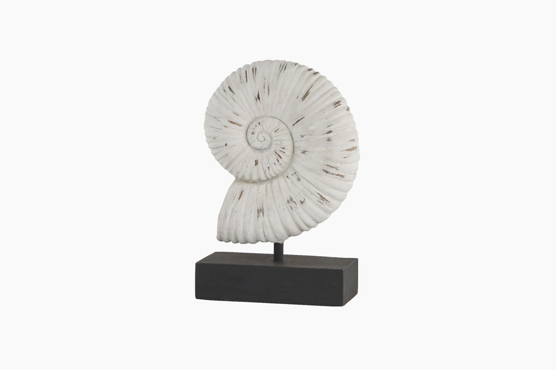 Shell Sculpture on a stand