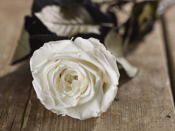 White Infinite Rose