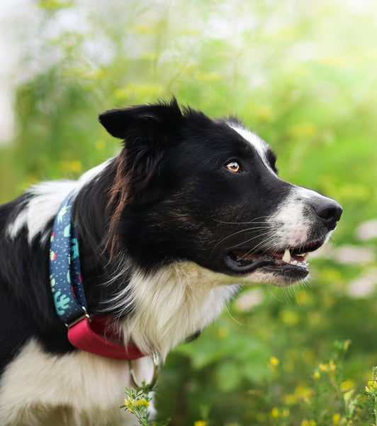 easy to slip on dog collars