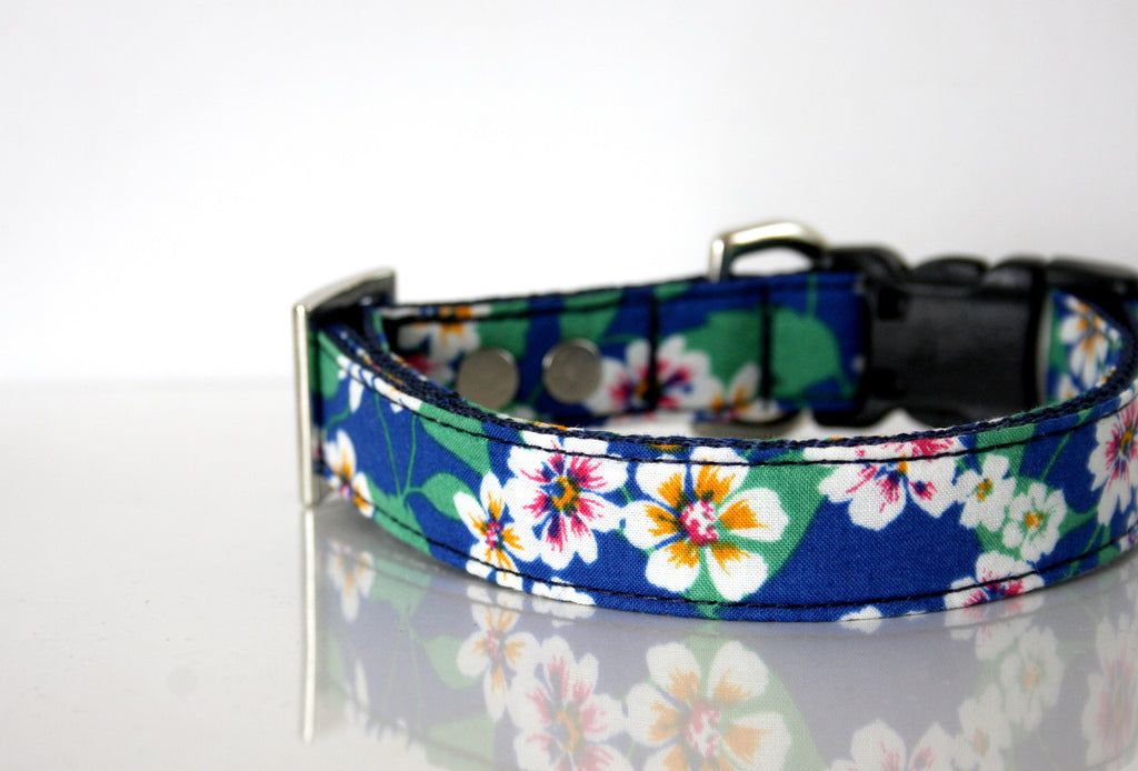summer dog collars