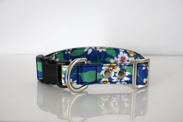 beach dog collars
