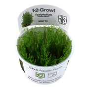 Tropica Taiwan Moss | Taxiphyllum 'Taiwan moss' | Tissue Culture - H2O Plants