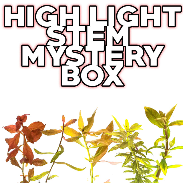 High Light Stem Mystery Box Plant Package