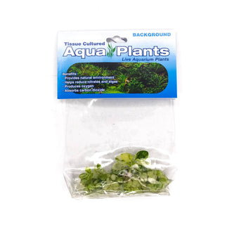 "Anubias Nana ""Variegated"" - Complete Aquatics Tissue Culture - H2O Plants"