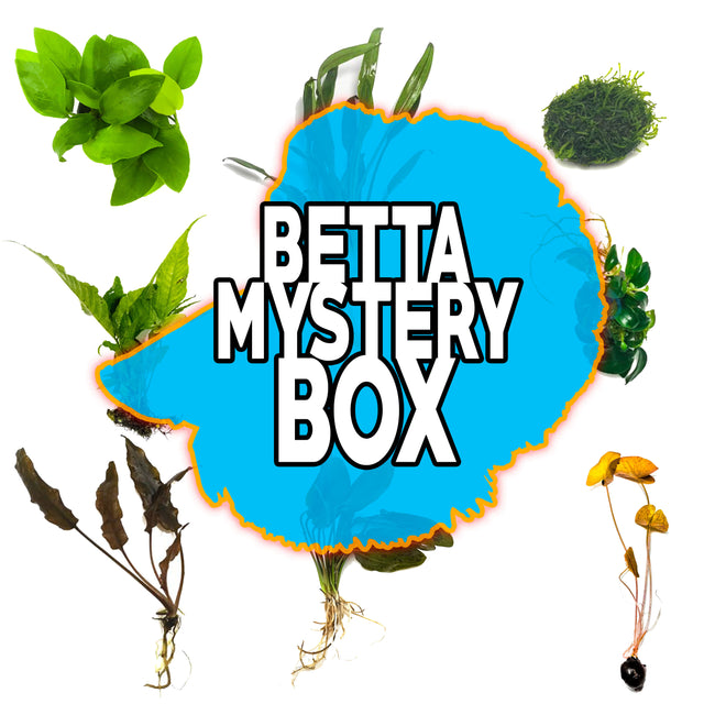 Betta Mystery Box Plant Package
