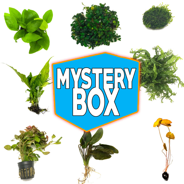 Mystery Box Plant Package
