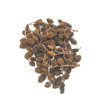 alder-cone-leaf-litter-shrimp-food-baby-shrimp-tannins-ph-reducer