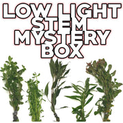 Low Light Stem Mystery Box Plant Package - H2O Plants