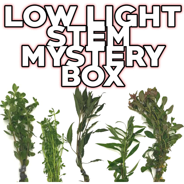 Low Light Stem Mystery Box Plant Package