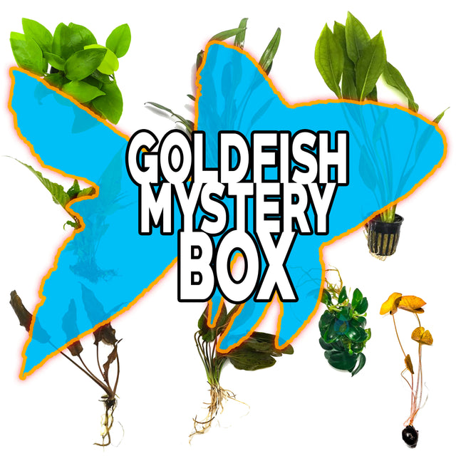 Goldfish Mystery Box Plant Package