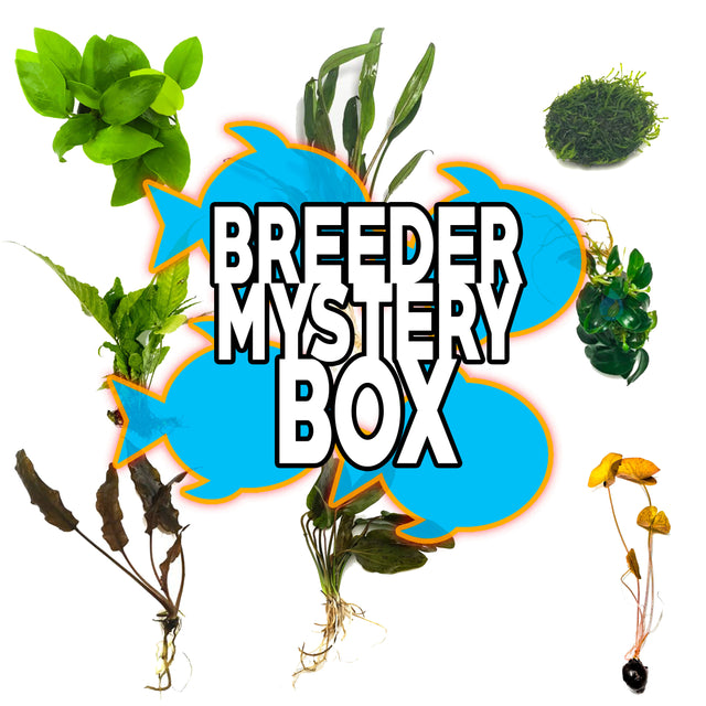 Breeder Mystery Box Plant Package