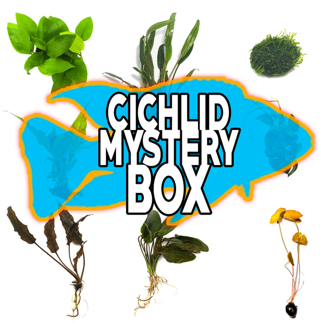 Cichlid Mystery Box Plant Package