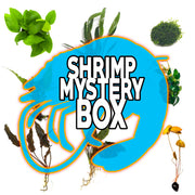 Shrimp Mystery Box Plant Package - H2O Plants