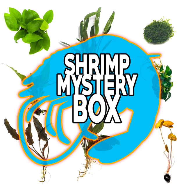 Shrimp Mystery Box Plant Package