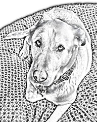 pet portrait enhanced