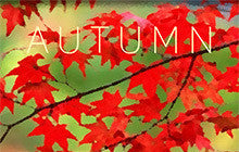Autumn Mac Game