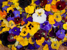 Edible & Medicinal Flowers of Spring