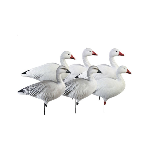 AVERY 6 Pack of Pro-Grade Full Body Snows Active Decoys (71188)