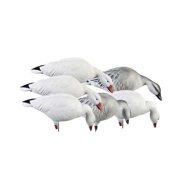 AVERY 6 Pack of Pro-Grade Full Body Snows Feeder Decoys (71189)