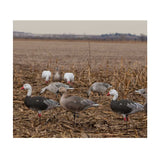 AVERY 12 Pack of Pro-Grade Full Body Snows Harvester Decoys (71199)