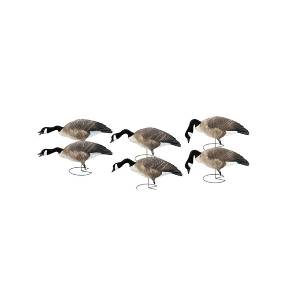 AVERY 6 Pack of Commercial Grade Full Body Honkers Feeder Decoys (71551)