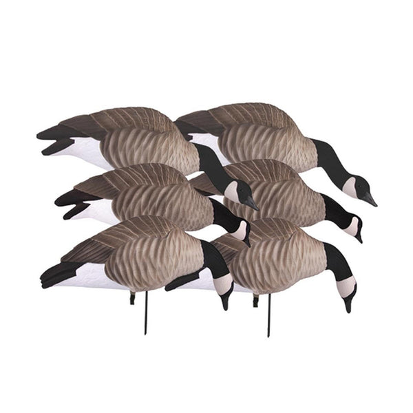 AVERY 6 Pack of Lesser Canada Feeder Pack of Decoys (72321)