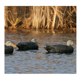AVERY 6 Pack of Over-Size Black Duck Decoys (73015)