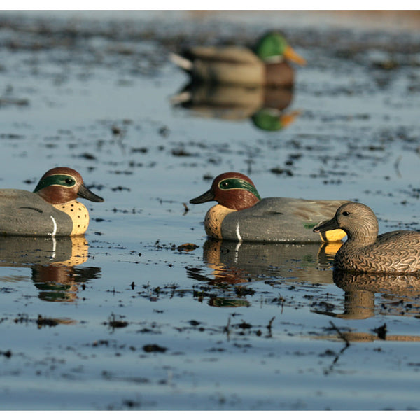 AVERY 6 Pack of Life-Size Green-Winged Teal Decoys (73021)