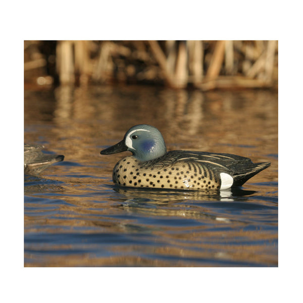 AVERY 6 Pack of Life-Size Blue-Winged Teal Decoys (73025)