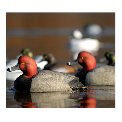 AVERY 6 Pack of Over-Size Redhead Decoys (73029)