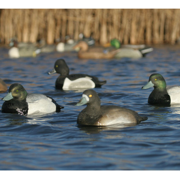 AVERY 6 Pack of Life-Size Blue-Bill Decoys (73038)