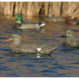 AVERY 6 Pack of Life-Size Gadwall Decoys (73045)