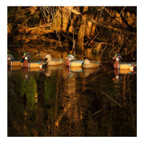 AVERY 6 Pack of Pro-Grade Wood Duck Decoys (73135)